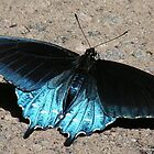 Iridescent Blue by Jean Gregory  Evans
