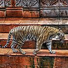 Tiger @ Animal Kingdom by BreakerSteve