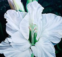 """""""Angel"""" - oil painting of a pure white gladiola flowers by James  Knowles"""