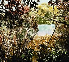 Nature - The Wonderment That Surrounds Us by Roger Sampson
