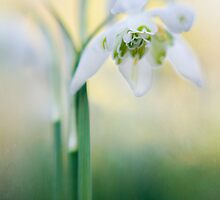 A flower in spring by Jacky Parker