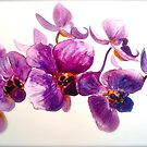 Orchidee... by  Janis Zroback