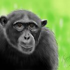 Chimpanzee - Sketched on an iPad by Ray Cassel