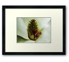 "'Magnolia & Bumble Bee"" Framed Print"