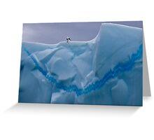 My Snazzy Iceberg (Kelp Gull, Pleneau Island, Antarctica) Greeting Card