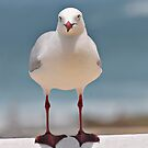 Gull Watching by bazcelt