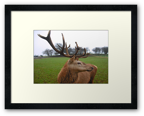 A Stag's Grace by Dawn B Davies-McIninch