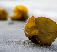 Seaweed Baubles by Chris Prior