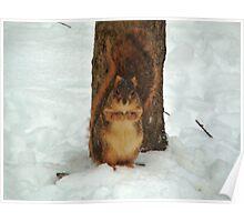 Camo Squirrel Poster