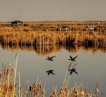 Oak Hammock Marsh by Larry Trupp