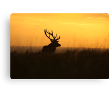 The Pride Of Nature            (Large Version) Canvas Print