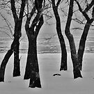 winter Trees at the Lake by CORA D. MITCHELL