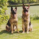 Max and Gemma by Dorothy Thomson