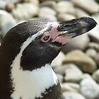Penguin @ Paradise wildlife park by claireandcoco