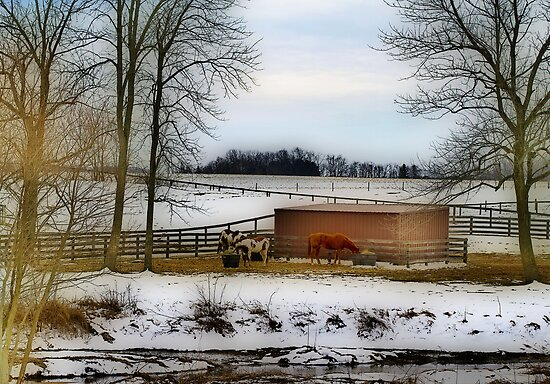Hungry Horses by Trudy Wilkerson