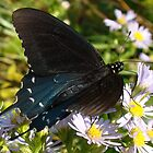 Blue Butterfly II by BLemley