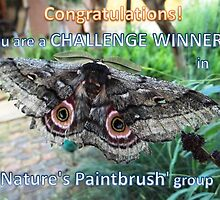 Challenge Winner banner - Nature's Paintbrush by Maree  Clarkson