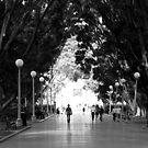 A Walk in the Park. by Lynne Haselden