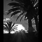 Monochrome Sunset by larry flewers