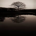 Lonely Reflective Tree Over Calm Waters. by miradorpictures
