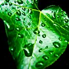 Tears on a heart Leaf by Lyndy