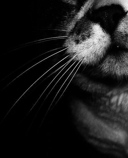 02-25-2011  My Cat's Nose by Margaret Bryant