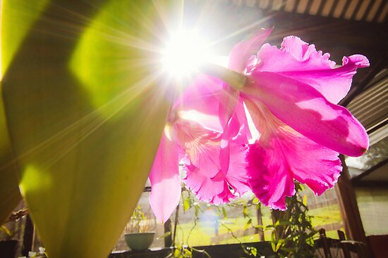 Orchids in the Morning by Donell Trostrud