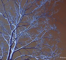 Dark Woods - Color enhanced photograph by Betty Northcutt