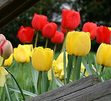 Tulips and Daffys by Janet  L. Buehler