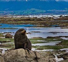 Seal on a Rock by Werner Padarin