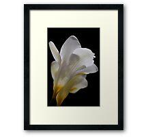 White flower 4558 Framed Print