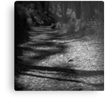 Shadows on the Path Metal Print