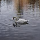 Mirror Pond Swan by ka7bzg