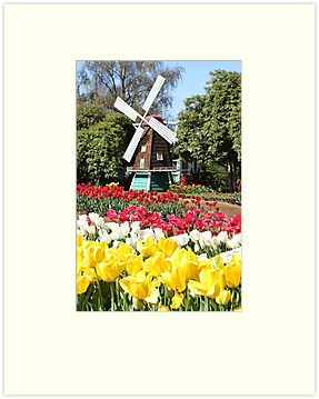 Windmill and tulips by papillonphoto