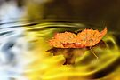 Golden leaf by Lyn Evans