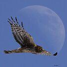 Birds of Prey by Dennis Cheeseman
