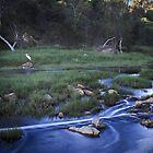 Chapman River ~ Geraldton by Pene Stevens