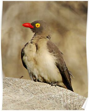 Red Billed Oxpecker by Michael  Moss