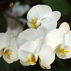 Orchid Bunch by Rainy
