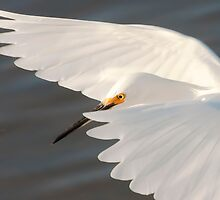 Egret Portrait by noffi