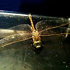 iPhone Dragonfly 3 by TeAnne