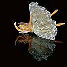Fallen Angel by Emily Clarke
