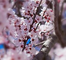 The Trees Think It's Spring by Renee D. Miranda
