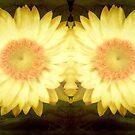 Sunshine!!! ©  by Dawn M. Becker