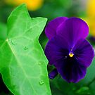 My Blue Flower by Phil Campus