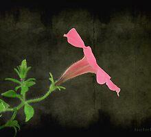 pink by janetlee