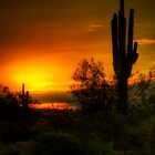 Cactus Sunrise  by Saija  Lehtonen