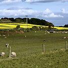 Down on the Farm by AnnDixon