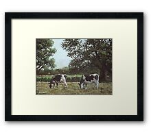 Two Cows in field at Throop Framed Print
