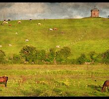 Rural Countryside Farm Scenic Nature Sunset Landscape Photography In Ireland. by upthebanner